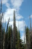 Bluer Skies than Montana