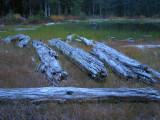 Lakeside Logs