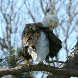 eagle 0026 2-20-07.tif.jpg