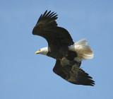eagle flight 0091 3-31-07.jpg