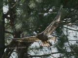 eagle first flight 0241 6-2-07.jpg