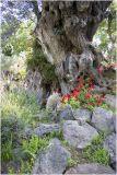 Olive, Lavender & Petunias