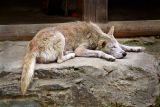 IMG_2295-sleeping-dog-1.jpg