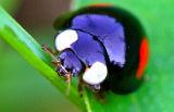 0962 Order: Coleoptera