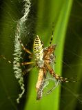 0990 Order: Arachnida