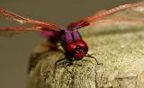 5390 Order: Odonata