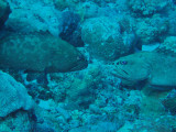 North Horn Osprey Reef  & Shark feed day 2 (10)