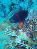 North Horn Osprey Reef  & Shark feed day 2 (11)