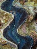 North Horn Osprey Reef  & Shark feed day 2 (13)
