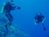 North Horn Osprey Reef  & Shark feed day 2 (14)