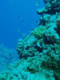 North Horn Osprey Reef  & Shark feed day 2 (19)