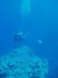 North Horn Osprey Reef  & Shark feed day 2 (21)