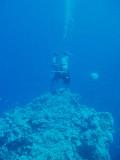 North Horn Osprey Reef  & Shark feed day 2 (22)