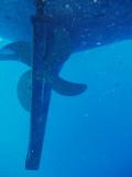 North Horn Osprey Reef  & Shark feed day 2 (23)