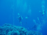 North Horn Osprey Reef  & Shark feed day 2 (24)