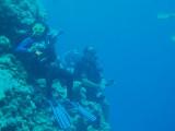 North Horn Osprey Reef  & Shark feed day 2 (26)