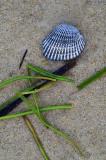 Shell Musing.jpg