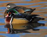 Duck Wood D-005.jpg