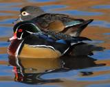 Duck Wood D-006.jpg