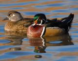 Duck Wood D-008.jpg