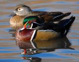 Duck Wood D-009.jpg