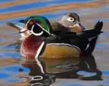Duck Wood D-011.jpg