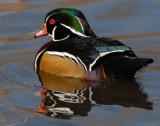 Duck Wood D-012.jpg