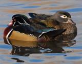 Duck Wood D-014.jpg