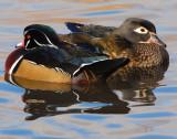 Duck Wood D-016.jpg