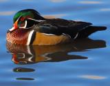 Duck Wood D-019.jpg