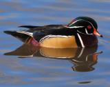 Duck Wood D-023.jpg