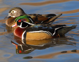 Duck Wood D-025.jpg