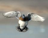 Duck Wood D-099.jpg