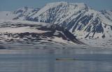 Polar Bear swimming 3