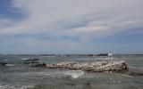 Kaikoura shore OZ9W8109