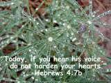 Hebrews 4:7b