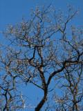 IMG_2744 oak tree.jpg