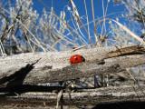 IMG_2763 red lady.jpg