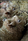 Are Ewe Feeding?