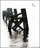 Trestles, Cardiff Bay