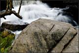 Tree Rock Water