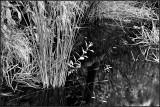 Pond Life?