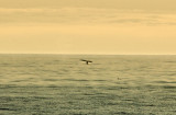 Whale in the Distance