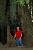 Redwood State Forest