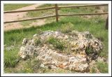 Petrified Stump