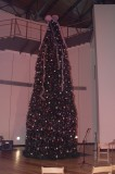 Tree in the Womens Museum