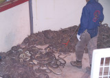 Getting the new batch of snakes settled down
