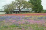 Wildflowers and Fauna of Texas