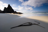 A Kelp flourish on Allen's Beach