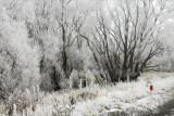 MacKenzie Country Hoar Frost